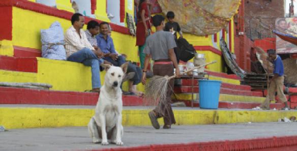 happy dog 1