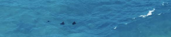 Capture d'écran 2014-03-11 à 14.19.19