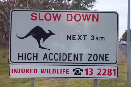 kangaroosign1