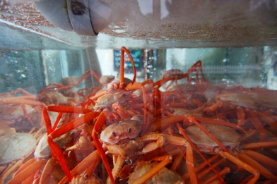 South Korea - Sokcho - Crab City