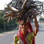 India, Rajasthan - Women bringing back cooking wood
