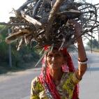 India, Rajasthan - Women bringing back cooking wood