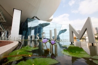 Singapore - Water lilies of the Science museum