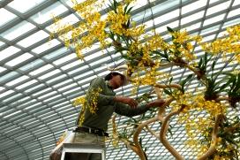 Singapore - Gardening under glasshouse