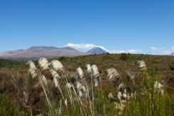 New Zealand - Tongariro National Park